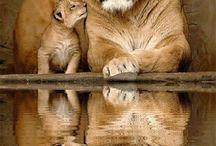 Gli animali si capiscono senza parlare...