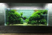 Sumida by Takashi Amano