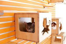 Gats / Gatos / Cats