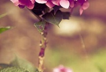 Kwiatki sratki