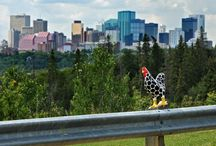 In & Around Edmonton / Edmonton in one of Canada's most prosperous provinces, and known as Festival City. With so many events happening in and around Edmonton, there's always something to do!  Visit www.paranych.com for all your Real Estate Needs