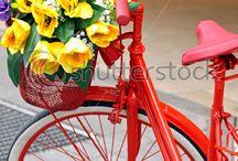 Bicycles / by Debbie Ross Kosterman