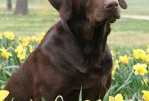 Dogs in Spring