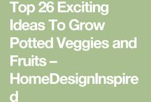 Growing potted vegetables