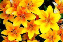 Flores e cores e plantas