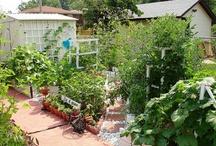 garden / by jaznak