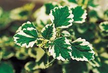 Trees, shrubs,plants and their identification