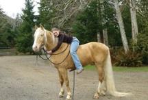 Horses :) / by Nikki Kuster