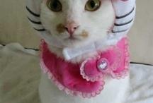 Hello Kitty / by Kimberly Tresch