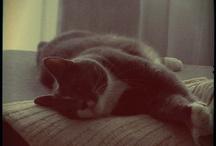 Nekku & Limppu & Pulla / Cats