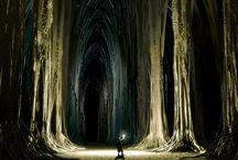 florestas / paisagens