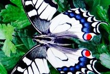 Motyly