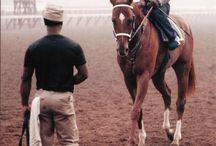 cavalli da corsa❤❤❤