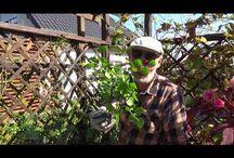 Ogród -zielone pogotowie