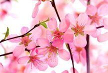 des fleurs, la vie...