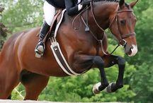 Equestrain - eventing