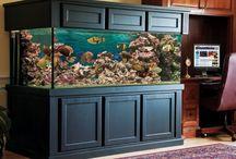 Chesapeake Bay Fish Tank