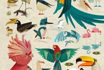 uccelli illustrati
