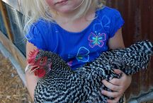 My new chicken coop / by Corin Wright Wright