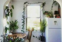 Växter