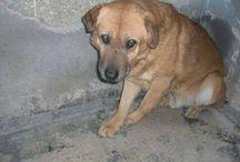 Animali in difficoltà / Animali in difficoltà bisognosi di attenzioni, di aiuto o per i quali battersi perchè vivano una vita dignitosa