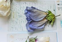 Dried Flora Projects / by Cindy Lee Jones