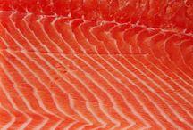 Ryby a jiné potvory