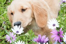 Stephanie Wolf Photography / Pet Photography