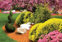 Tree & Shrub Care / Tips on maintaining and improving trees and shrubs