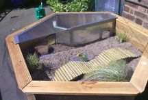 Tortoise and Turtle Enclosure Ideas and Care