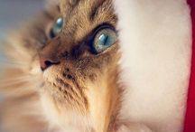 Pinyóka / my cat is my best friend