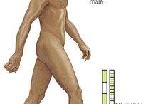 ontstaan van de mens / vanaf de sahelanthropus tot de eerste boeren  / by Xavier Adams - History and Science