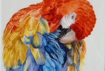Pájaros pintados
