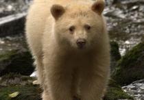 Bears / Bear Photos