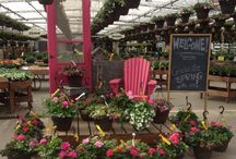 Alberta Annuals / Check out our homegrown Alberta annuals!
