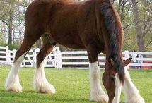 Horses / Pics of horses