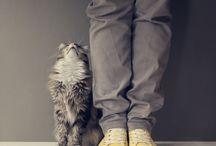 Cute Pets / by Toni Kaiser
