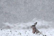 Winter 겨울