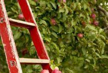 Fruit visuals