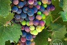 Wine Grapes / Beautiful photos of wine grapes