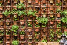 Corriea vertical garden