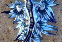 Flamboyant Reef