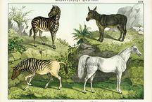 Graphics - Horses / by De Jay