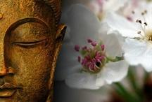 Zen Garden & Japaneese Gardens
