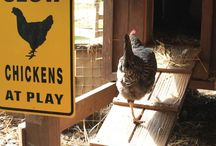 Chickens & Kids / There is so much learning that happens when children observe and participate in the care and raising of animals. Here are some great ways to incorporate chickens into your play spaces with children.
