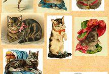 Cats / by Виктория Ясенская