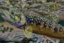 Brook Trout Fish Paintings / Collection of Brook Trout fish paintings.