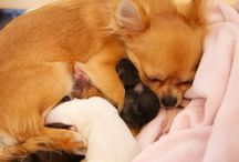 My Dog goes wuff! / Ein süsser Hundeblog: https://mydoggoeswuff.wordpress.com  Dogstyle * Lifestyle * & more*