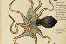16th Century Natural History