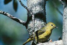 birds I've seen in my backyard / by Genelle Betts